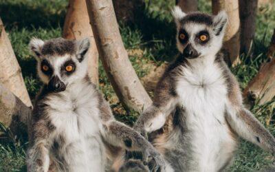 Madagaskar: All Inclusive zájezd z Prahy na Madagaskar 33.190 Kč