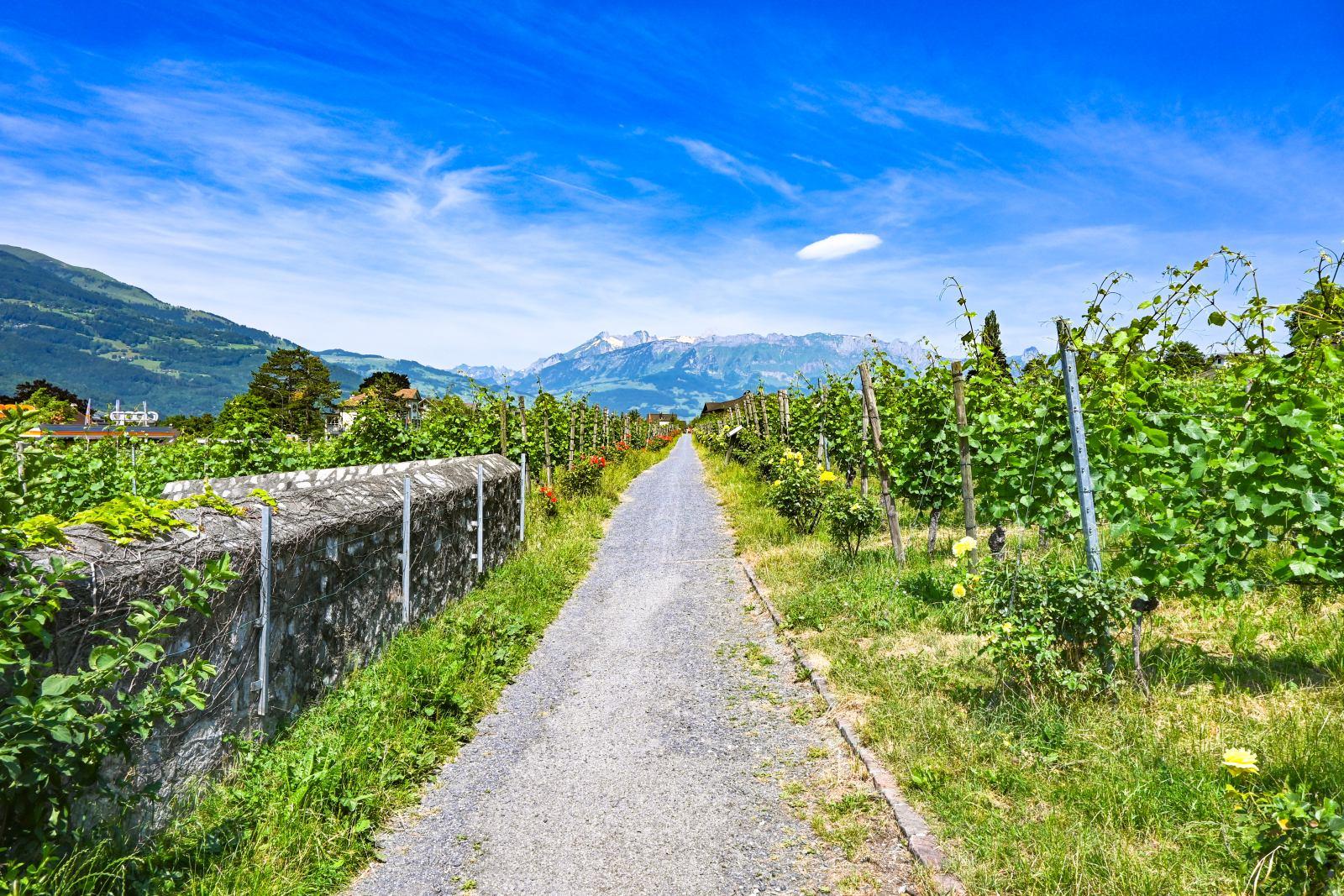 Vinice ve Vaduzu