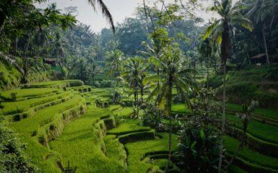 Indonésie už nechce na Bali baťůžkáře