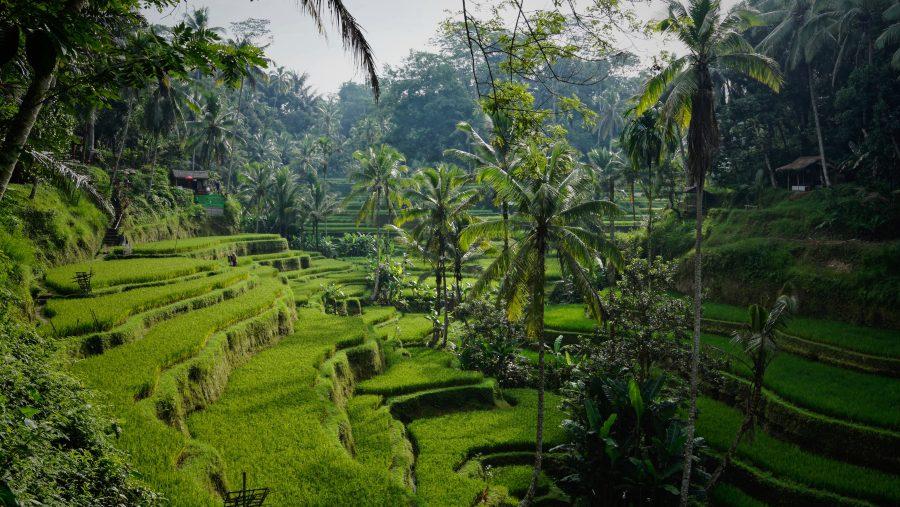 Indonésie otevřela pro turisty z vybraných zemí